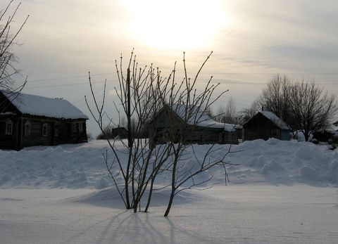 Муравейка в марте